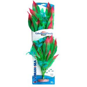 PLANT AMAZON SWORD GN XL – BLUE RIBBON